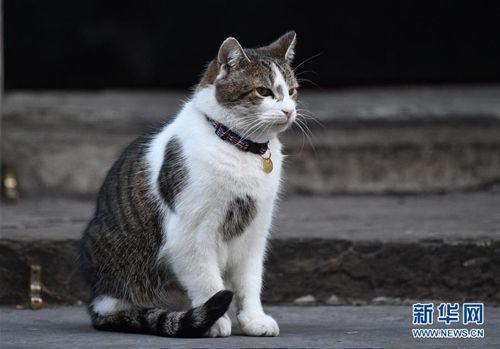 """资料图:英国""""第一猫""""拉里。"""