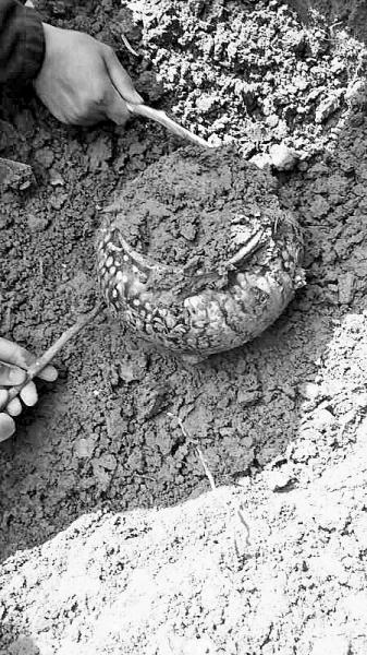 古墓中出土的文物