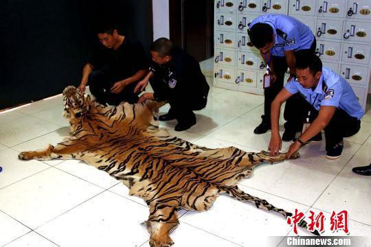 办案森警对虎皮进行检查。 常宗波 摄