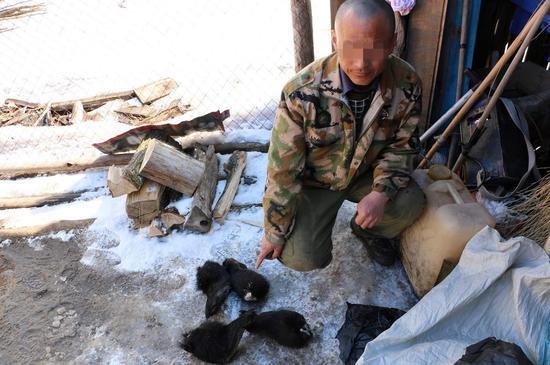 黑龙江破获特大濒危野生动物捕杀案:含貂皮熊掌