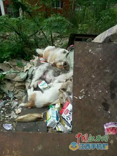 """""""学霸狗""""被打死扔在垃圾堆里"""