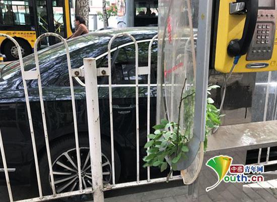 因风太大,树枝被吹下来,挂落在破旧的电话亭上。中国青年网记者 张瑞宇摄