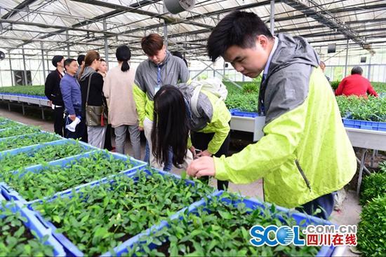 高清图集:走进遂宁东山村绿色生态产业带动村民致富