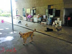 救助站内的流浪犬多为土狗