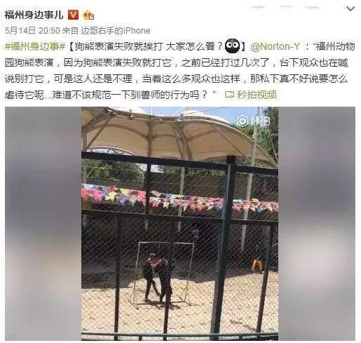"""周日上午,来自四川的网友""""诺顿"""",在福州动物园观看猛兽表演时,拍下了36秒的驯兽师体罚狗熊的行为。"""
