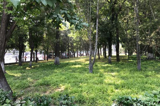 图:东单公园内恢复绿地景象