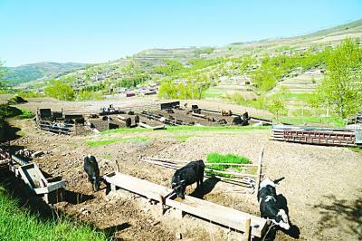 农业合作社养殖场。本报记者赵斌艺摄/光明图片