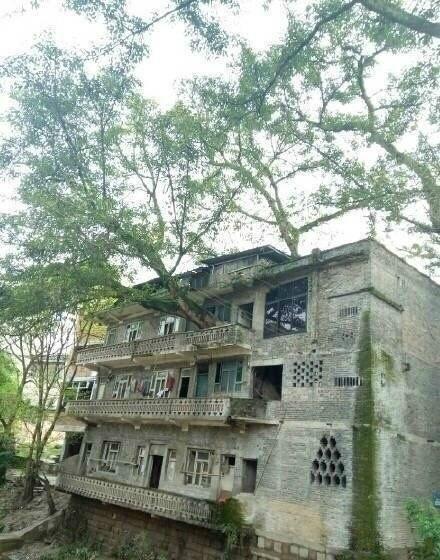 百年大树穿过三层高楼房