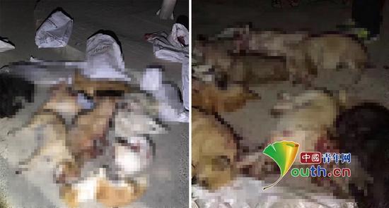 兰州市榆中县大批流落狗被棒杀