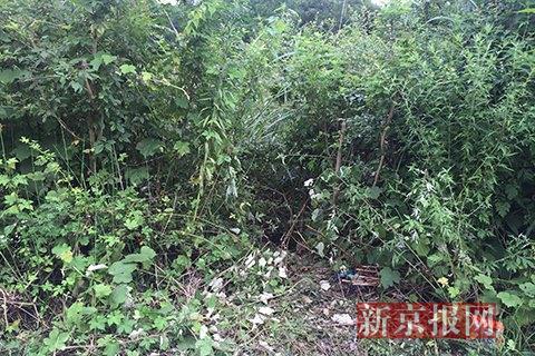小女孩被拖入的所在波折丛生。本组图片拍照:新京报记者安钟汝
