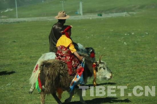 △图为骑着牦牛迎接班禅大师的治多县当地少年。转载该作品,须注明来源中国西藏网和署著作者名,否则将追究相关法律责任。