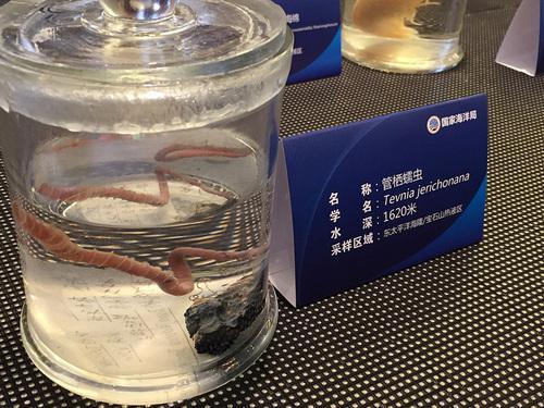国家海洋局展示的深海生物标本。图为管栖蠕虫。光明日报记者 杨舒摄/光明图片