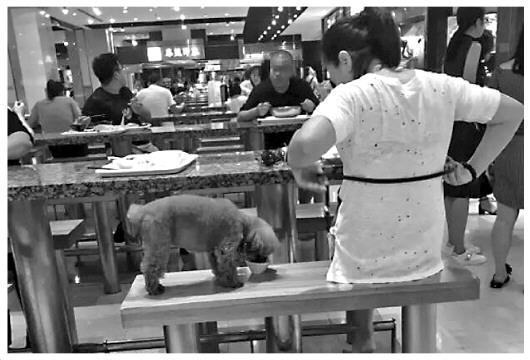 图为辽宁大连某美食广场,有人将奶茶倒进大众餐具,让宠物狗舔食碗里的奶茶。(质料图片)