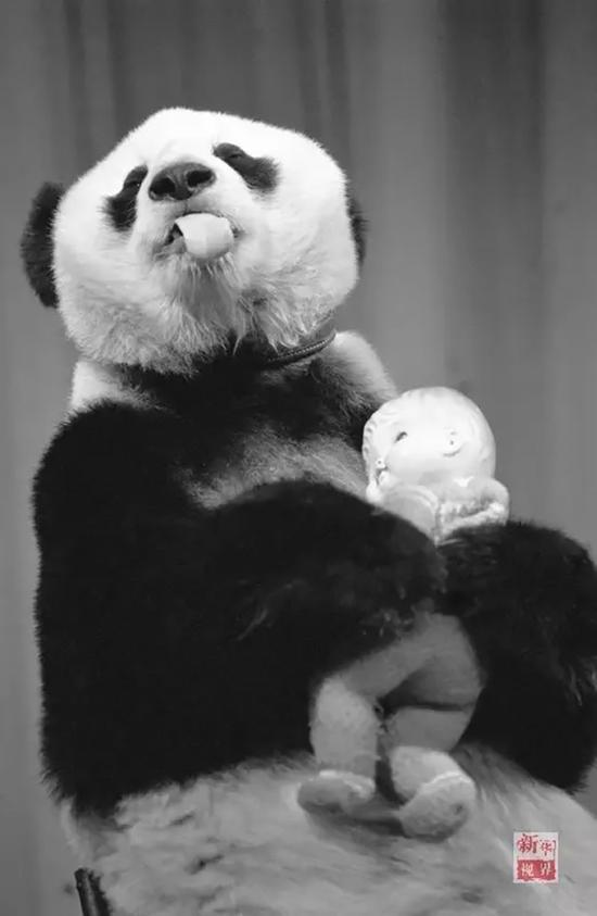 1990年11月的巴斯 新华社记者 张瑞琪 摄