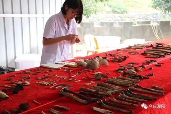广州中山大学社会学人类学系的学生在认真整理遗骸,记录数据。
