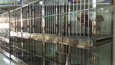 一家宠物店老板表示,节前店内笼子已经预订一空。
