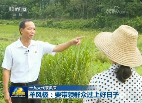 海南省白沙黎族自治县田表村地处大山深处,1998年,36岁的羊风极当选为村支书,理由是他是村里唯一的高中生。