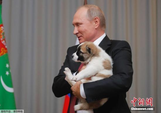 阿拉拜犬分布于从里海至中国、自南乌拉尔到阿富汗之间的广袤区域,通常被认为是藏獒的后代,一直是游牧民族的守卫犬,用以保护主人生命财产和家居安全。