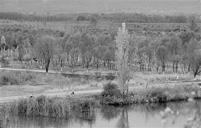 延庆蔡家河,昔日荒滩如今成为北京单片面积最大的林地 摄影/本报记者 袁艺