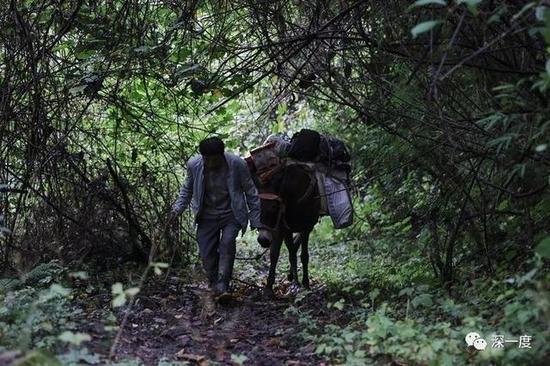 △驼送营养餐回村的路上,郭普全俯身经过一处树林。