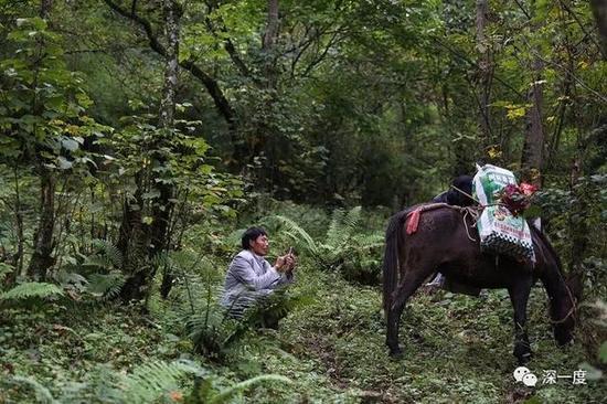 △行至树林深处,郭普全让驴吃些草,自己也趁机休息一下。