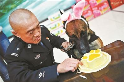 公安局警犬集体过生日 吃特制蛋糕场面萌人(图)