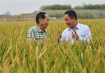 2016年9月,袁隆平(左)和河北硅谷农科院超级杂交水稻百亩树模田卖力人宋福如在树模田内。河北硅谷农科院供图