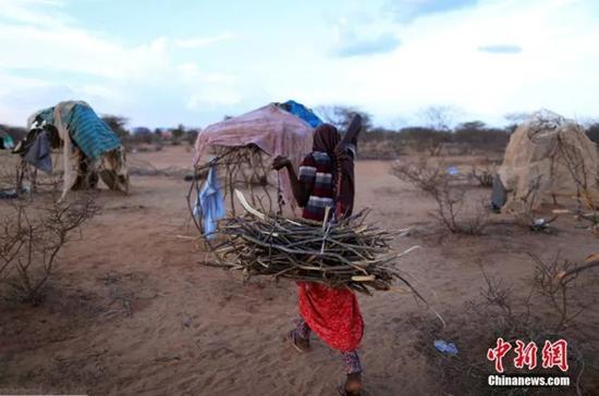 索马里Dollow,当地遭遇严重干旱,灾民用树枝搭建帐篷,每天都有很多人因干旱逃离家园。 中国新闻网 资料图