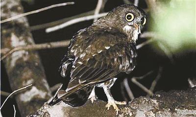 夜晚未名湖沿岸,可看到国家二级保护动物鹰<span class=