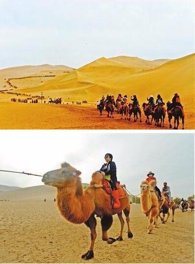 游客在鸣沙山骑骆驼体验沙漠风情。 裴强 图