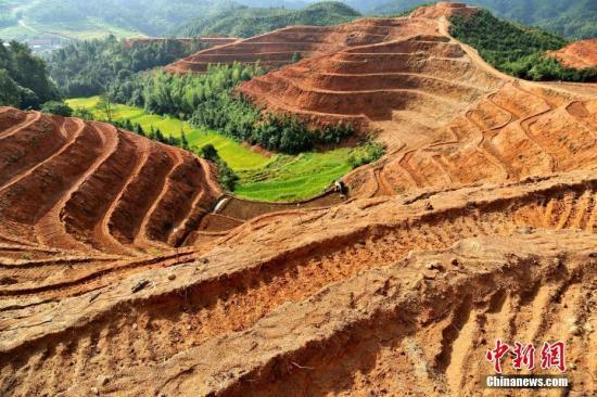资料图:江西省万载县白水乡一处山村梯田里,村民们忙着莳植百合。 邓龙华 摄