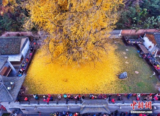 据悉,古观音禅寺始建于唐贞观年间(公元628年),距今有1400年历史,为终南山千年古刹之一。 图片来源:视觉中国