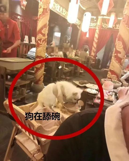 火锅店人和狗一桌同吃 宠物狗当众舔餐盘无人管