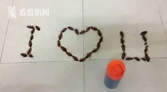 """男生用38只活蟑螂拼成""""I love U""""告白被拒绝"""