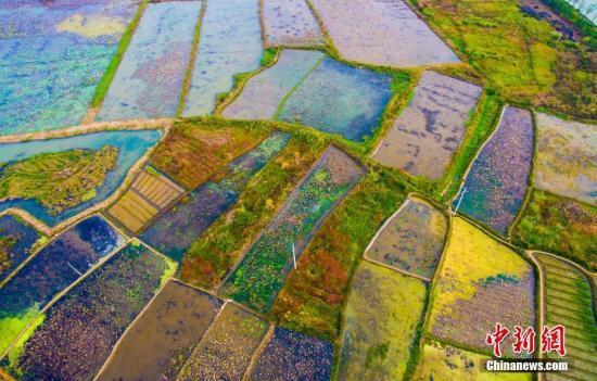 资料图:农田。 欧阳常海 摄