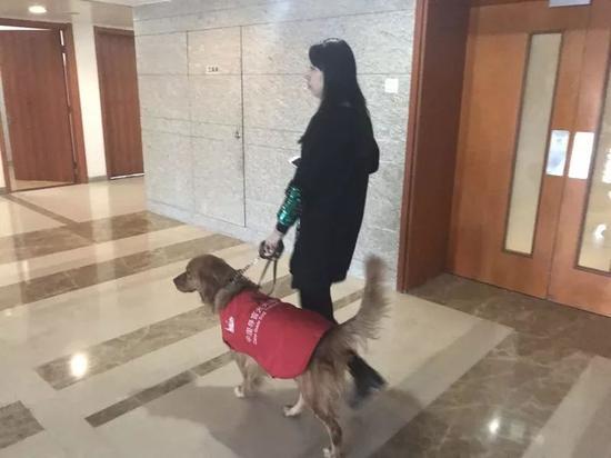 徐清在中国盲文图书馆参加心理学培训班,下课后呆萌领她前往食堂吃饭。新京报记者王佳慧 摄
