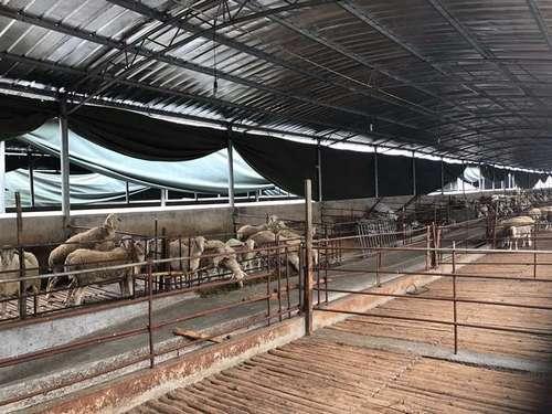 图为事发的湖羊养殖场。