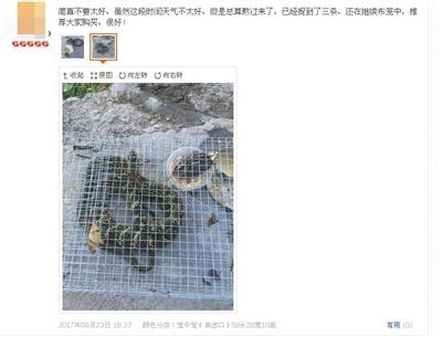 商家藏网购平台非法贩卖捕猎工具 附送视频教程