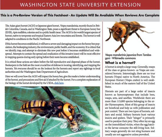 华盛顿州立大学网站上关于大虎头蜂的信息。
