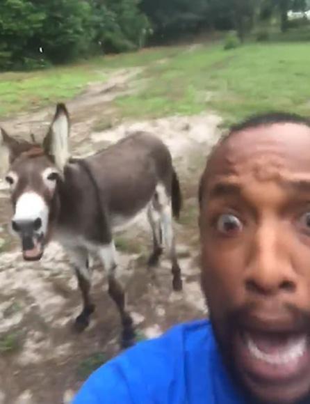 美国一男子与驴合唱《狮子王》开场曲 笑翻网友|特拉维斯