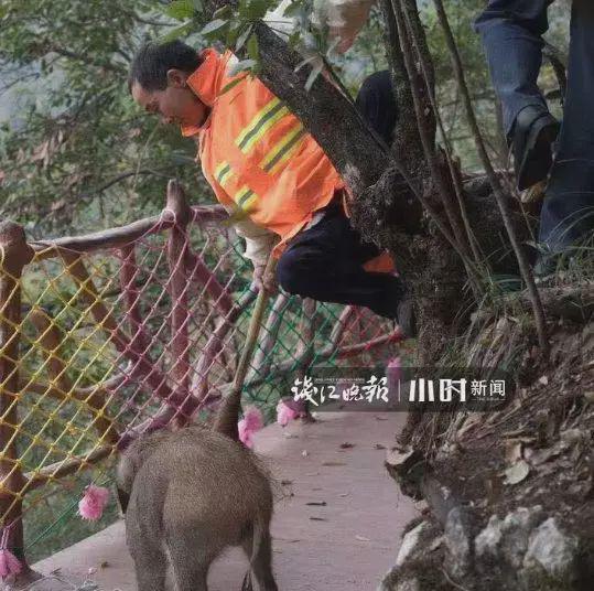 「虎龙赌博」北京扫黑除恶5号行动,打掉122个违法犯罪团伙