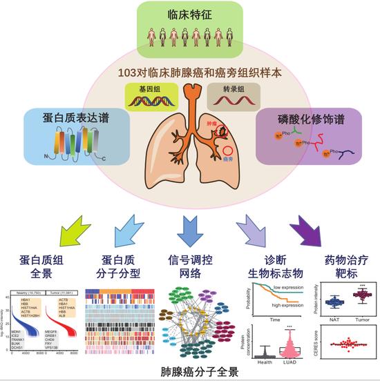 赢咖3测速,国科学家首次揭示肺腺赢咖3测速癌分图片