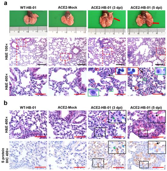 [杏悦注册]动物杏悦注册模型转基因小鼠做出重要贡图片