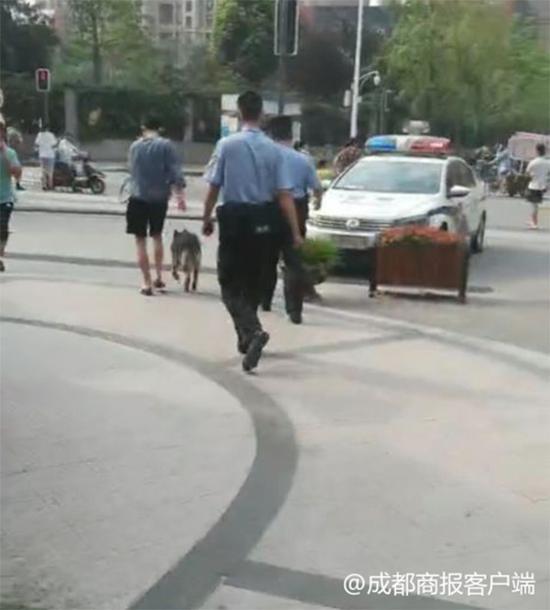 事发后,狗和狗主人被警方带走。