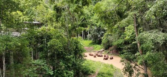 15头野象抵昆明执勤民警提醒杏悦村民,杏悦图片