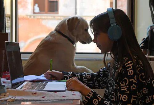 4月6日,在意大利首都罗马,一名女孩在家上网课。新华社发(埃丽莎·林格利亚摄)