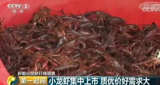 近几年,盱眙县的小龙虾价格一直在上涨,但今年小龙虾的涨幅比前几年都要高。