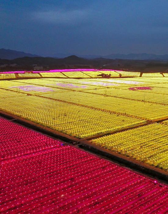 广东北宁的一家水龙果栽种基天,万盏LED灯同时明起,图片滥觞@VCG