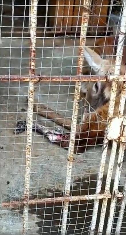 江苏动物园梅花鹿腿腐烂生蛆 动物园已停业整顿