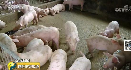 """多条硬措施稳""""猪"""":这样养猪国家最高补助500万"""